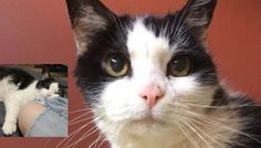 13 Year Old Shelter Cat Facing Uncertain Future Until She Met Someone She'd Been Waiting for - Love Meow