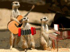 New trending GIF on Giphy. animal band meerkat. Follow Me CooliPhone6Case on Twitter Facebook Google Instagram LinkedIn Blogger Tumblr Youtube