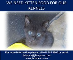 Bank Branch, Kitten Food, Donate Now, We Need, Animals, Animales, Animaux, Animal, Animais
