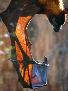"""What an amazing picture of a bat's """"hand"""" bones!"""
