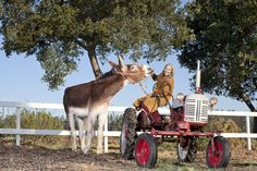 Oklahoma Sam, owned by Linda Davis of Watsonville, gets the Guinness World Record title as tallest donkey. (Photo by James Ellerker/Guinness World Records)