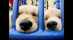 La pet-therapy entra a San Vittore con i cani di Maith Onlus :http://www.qualazampa.news/2015/12/03/la-pet-therapy-entra-a-san-vittore-con-i-cani-di-maith-onlus/