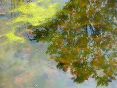 Proč se vyhýbat vodě, která má podezřelou zelenou barvu, se dočtete v další novince na http://www.pribalovy-letak.cz/souvisejici-clanky/104-do-zelene-vody-ne. Váš Příbalový leták.cz