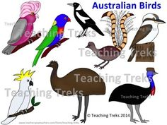 Australia is home to many unusual and beautiful birds. This is a clipart set of 24 images of Australian birds. Eight different birds are included, as can be seen on the cover image. All files are 300 dpi. This clipart may be used for single classroom and commercial use. $