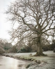 The Winter scape. A snaggle of branches and nature disrobed, with the secateurs following closely behind...Pampas fronds squirrelled away…