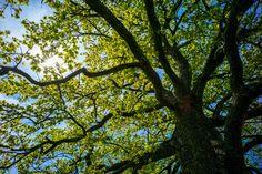 Baum in Münsing