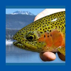 1000 images about grand lake colorado on pinterest for Grand lake colorado fishing