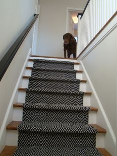 Stair runner rug runners carpets hallway darkened flooring sisal from the foot perfect for staircase treads lengthy and contemporary hall rug halls cheap kitchen red gray installation mat modern bl… Hardwood Stairs, Wooden Stairs, Painted Stairs, Painted Staircases, Hallway Carpet Runners, Carpet Stairs, Stair Runners, Hall Carpet, Basement Carpet