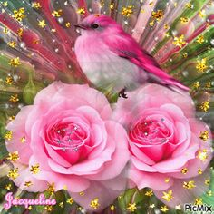 Little Bird Voor Tine de jong Love Rose, Pretty Flowers, Pretty In Pink, Flowers Gif, Beautiful Gif, Beautiful Roses, Beau Gif, Bon Weekend, Glitter Graphics