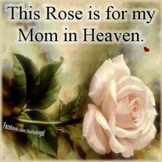 This rose is for my Mom in heaven