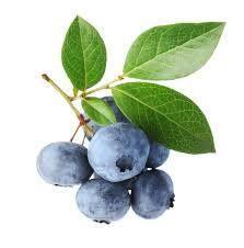 Blueberries - Little blue dynamos