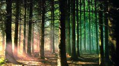 Forest Sunrise Wallpaper Landscape Nature Wallpapers in jpg format Lit Wallpaper, Forest Wallpaper, Green Wallpaper, Nature Wallpaper, Sunrise Wallpaper, Image Nature, Nature Images, Forest Scenery, Summer Nature Photography