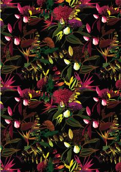 floral_foral_bird_of_paradise_f.gif (351×500)