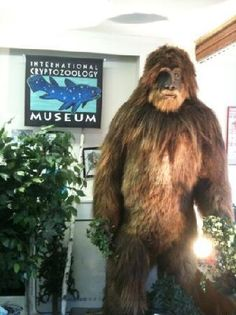 Portland, Maine - International Cryptozoology Museum - 661 Congress ST Portland, ME 04101