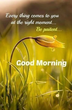 45 Good Morning Quotes Images To Make Your Happiest Day 43 Morning Wishes Quotes, Morning Quotes Images, Good Morning Quotes For Him, Good Day Quotes, Good Morning Inspirational Quotes, Morning Blessings, Good Morning Picture, Good Morning Friends, Good Morning Messages