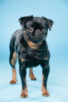 Jeg har mange forskjellige bakgrunner å velge mellom. Få et spennende og annerledes bilde av hunden din. Med farger kan vi skape kontrast eller harmoni og tilpasse uttrykket til din hund. Manga, Studio, Pets, Animals, Dog, Animales, Animaux, Manga Anime, Manga Comics