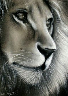chalk and charcoal drawing of a lion - Day 326 of my 366 Drawing Project by secrets-of-the-pe. Beautiful Drawings, Cool Drawings, Realistic Drawings, Beautiful Lion, Animals Beautiful, Drawing Projects, Art Projects, Drawing Ideas, Pencil Art