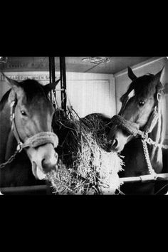 Famous stablemates Riva Ridge and Secretariat ran as an entry in the 1973 Marlboro Cup, with Secretariat winning and setting another world record for the mile and 1/8 and Riva runner-up.