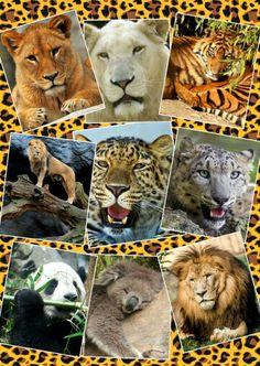 Cute wildlife animals
