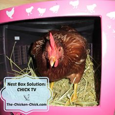 Nest Box Solution: Chick Tv