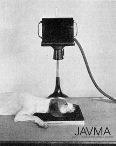 """#ThrowbackThursday - Veterinary radiology of a dog circa 1937. This photo ran in the Nov. 1937 issue of JAVMA, which advised: """"The amount of radiation absorbed in a single examination would rarely be dangerous, but since the effects are associated with cumulative absorption, every precaution to avoid the unnecessary exposure should be taken."""" https://www.avma.org/News/JAVMANews/Pages/151015d.aspx?utm_source=pinterest&utm_medium=socmed&utm_campaign=vethistory"""