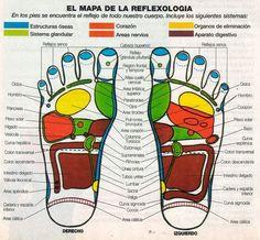 mapa de la reflexologia