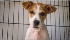 At the shelter, they named me Reynold. I am a boy who is only about 4 months old…