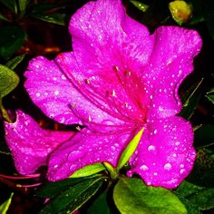 ☔ Primavera com noites e dias molhados ☔ . #raindrop #rain #nature #spring #beautiful #water #rainyday #raindrops #raining #love #colorful #flower #rainy #naturelovers #photography #art #rainydays #waterdrop #light #naturephotography #macro #photo #clouds #waterdrops #s4 #leaf #pink #cloud #tozas_ #macrophoto