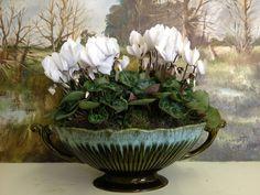 Elegant cyclamen planter in vintage tureen