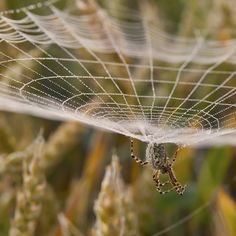 Spider | Flickr – Compartilhamento de fotos!