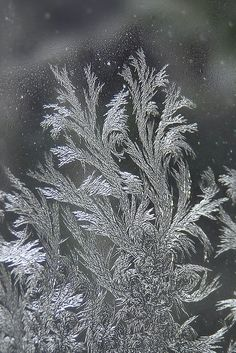 Ice Crystals | Delicate, artistic ice patterns by Jack Frost
