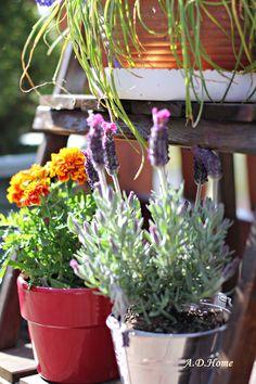 kwiaty, ogród, taras, lawenda