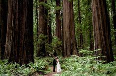 The Wedding Ones: Venues in the Redwoods
