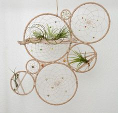 Wow talon at this! Tillandsia Jungalow Dream Catcher Wall Art - Natural Air Plant Dreamcatcher Wall Hanging - Modern Bohemian Wall Accent - Wedding Backdrop by MatriartBoutique on Etsy