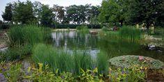 Pesti de apa dulce - Pescar Amator Stepping Stones, Golf Courses, Water, Outdoor Decor, Life, Gripe Water, Stair Risers