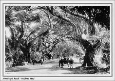MoubrayRoad-1885 by npkp0, via Flickr