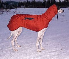 Hooded coat pattern to keep your sighthound warm in winter - detailed instructions with drawings plus photos sent in by owners who made this for their dogs.