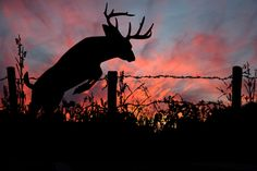 Whitetail Sunset Canvas Print / Canvas Art by Dustie Meads