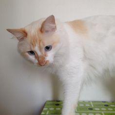 Perai eu tb sou #modelo aqui  rs #stuart #thecat Sessão de #fotos #rosso ;) #photoshoot #babycat #gatinho #gatos #cat #gato #cats  Visite nossa pagina e nosso Shop Link direto na descrição do perfil :) Conheçam o projeto e vejam nossos produtos sustentáveis :) Espalhe amor Namastê  _/\_  dGreenSP Fábrica de ideias sustentáveis  Visa motivar unir e guiar pessoas através de estratégias sustentáveis para transformar as mesmas e seus entornos com o objetivo de acelerar o desenvolvimento…