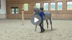 Zirkusschule Teil 2: Stillstehen & freies Rückwärtsrichten Video Stream, Horses, Train, Animals, Horseback Riding, Animales, Animaux, Animal, Animais