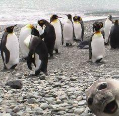 En komik hayvan fotoğrafları