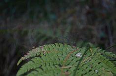 Los opiliones son un orden de arácnidos conocidos vulgarmente como murgaños o segadores. Superficialmente son parecidos a las arañas.  http://www.asturnatura.com/articulos/quelicerados/aracnida-aracnidos-opiliones.php