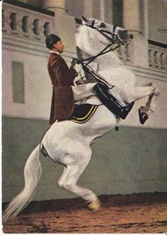 COURBETTE - OLDER LIPIZZAN HORSE POSTCARD SPANISH RIDING SCHOOL REITSCHULE