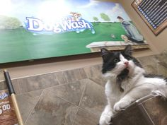 Cats in the dogwash?