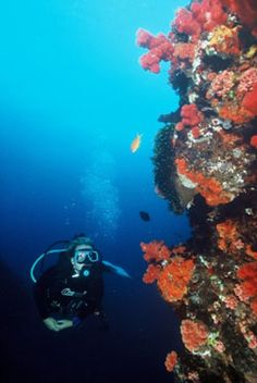 so excited to go diving again at sodwana bay! thanks mel for al the planning <3
