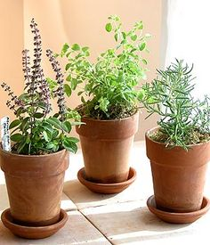 potted herb centerpieces wedding - Google Search