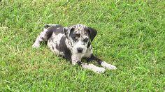 puppy free high resolution wallpaper