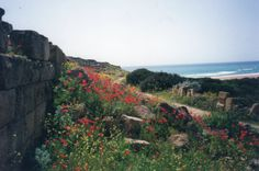 Spring flowers at Selinunte