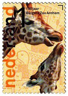 100 jaar Burgers' Zoo  Rothschildgiraffe      http://collectclub.postnl.nl/pages/detail/s1/10220000001790-2-21010000000080.aspx