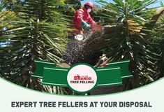Brand's can assist with any tree felling or tree care conundrum - call us for expert advice and assistance. Contact us on 0861 708 000 or (011) 708-0088 or brandstf@mweb.co.za / office@brandstreefelling.co.za Our Tree Felling teams are equipped with all of the necessary PPE and sanitising equipment. #treefelling #treecutting #dangeroustreeremoval #fallentreeremoval #essentialservicespermit #treefellingsolutions #brandstreefelling